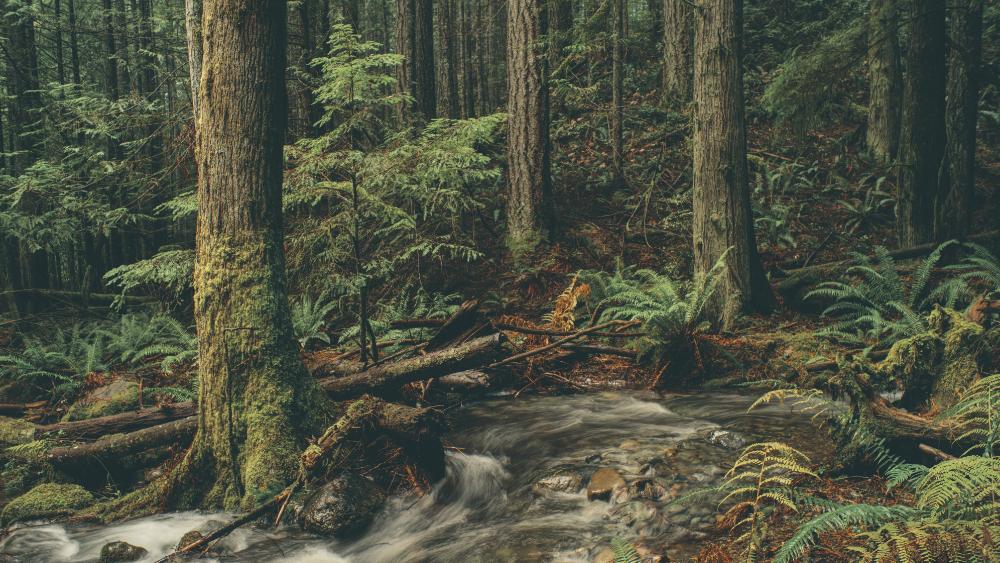 Forest Scent in Dark Tones