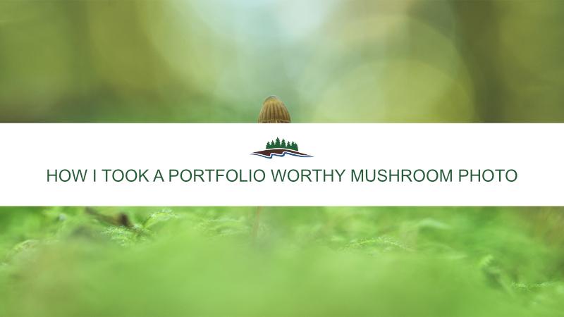 How I Took a Portfolio Worthy Mushroom Photo
